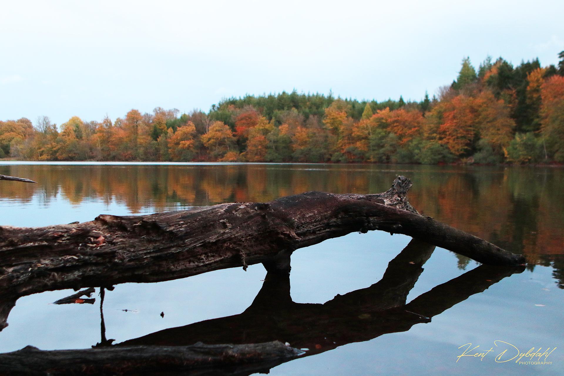 © Fotos Natur dybdahls.dk.